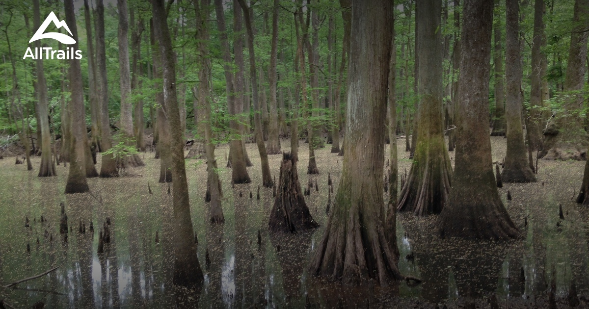 Best Trails in Congaree National Park AllTrails
