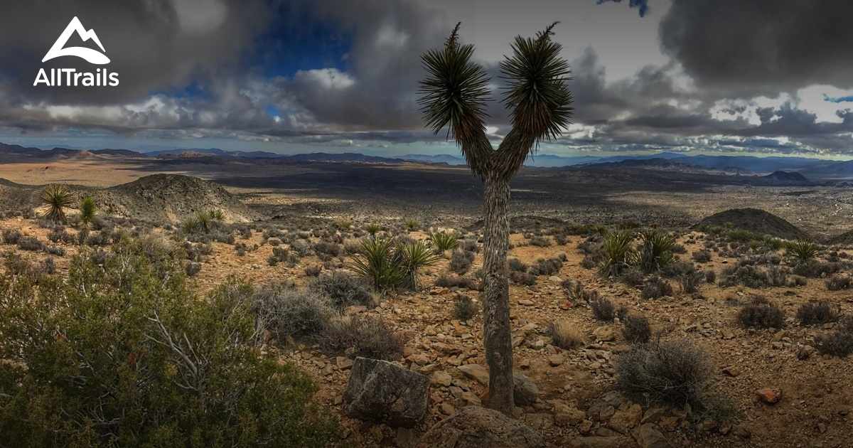 Best Trails In Joshua Tree National Park Alltrails