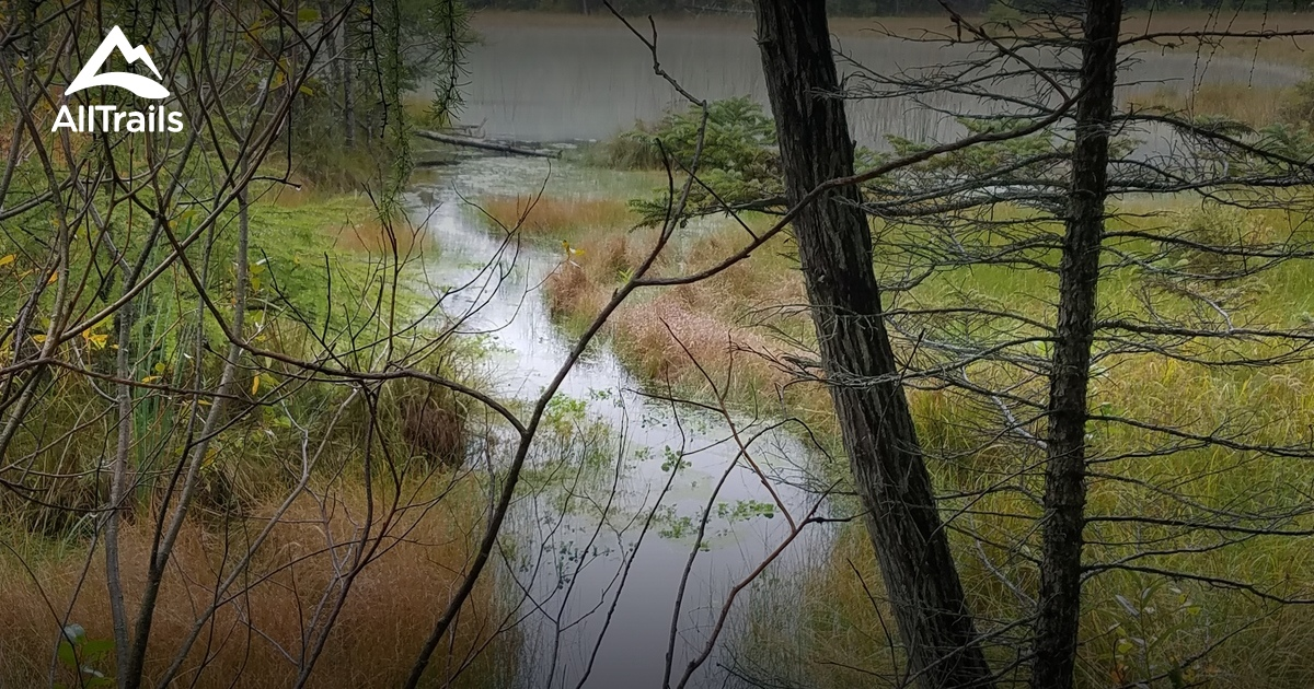 Best Trails in Rifle River Recreation Area - Michigan