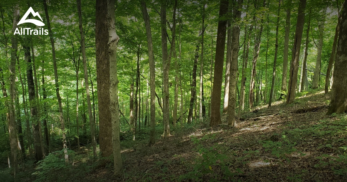Best Trails in Yellowwood State Forest - Indiana | AllTrails