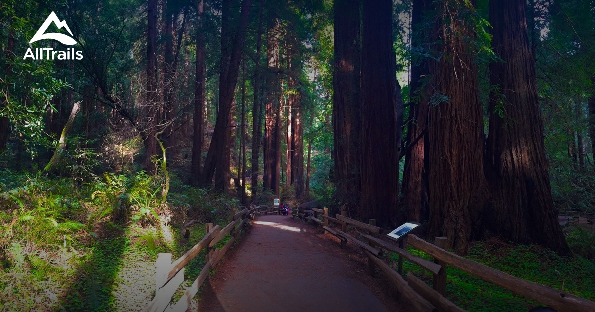 Best Trails In Muir Woods National Monument California
