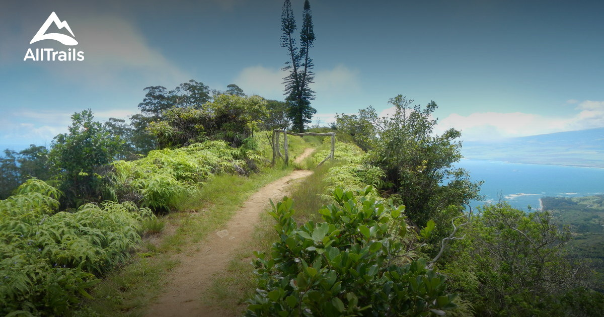 Best Trails In West Maui Forest Reserve Hawaii Alltrails