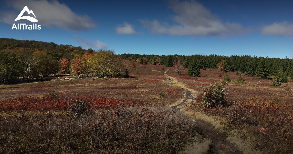 Best Trails in Dolly Sods Wilderness - West Virginia | AllTrails