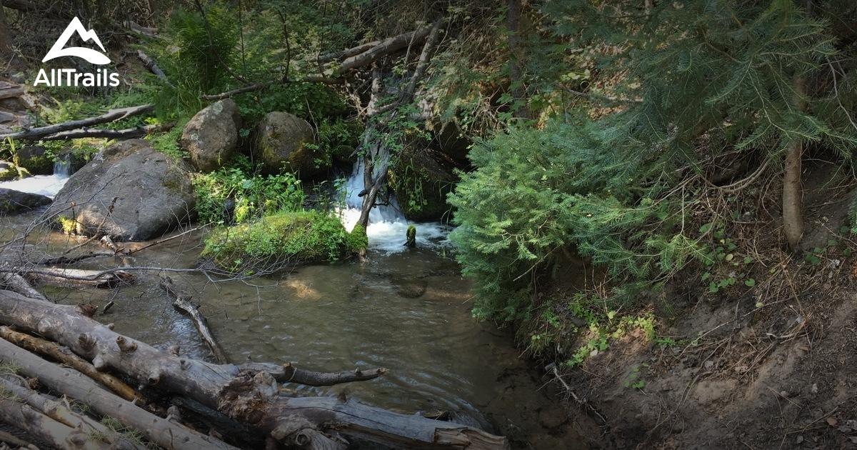 Best forest trails in Pine Valley Mountain Wilderness ...