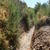 Picture of Caballero Canyon Trail