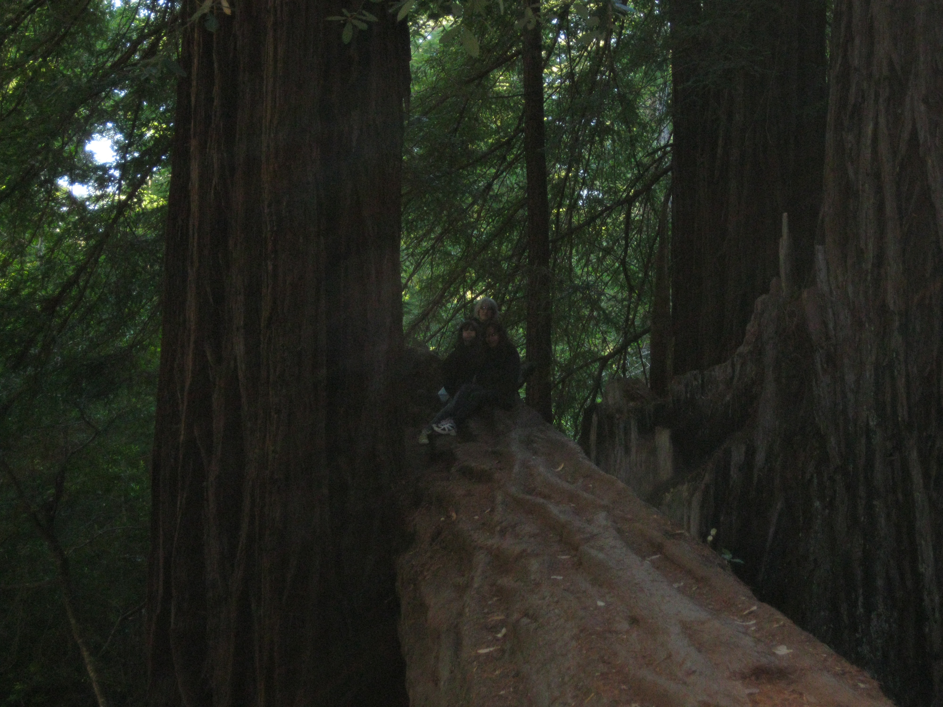 Picture of Sequoia Trail