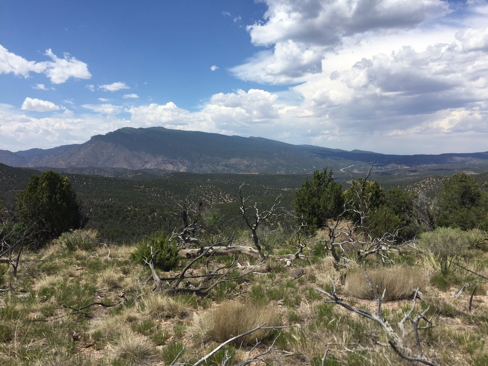Cibola National Forest New Mexico Forests Alltrails Com