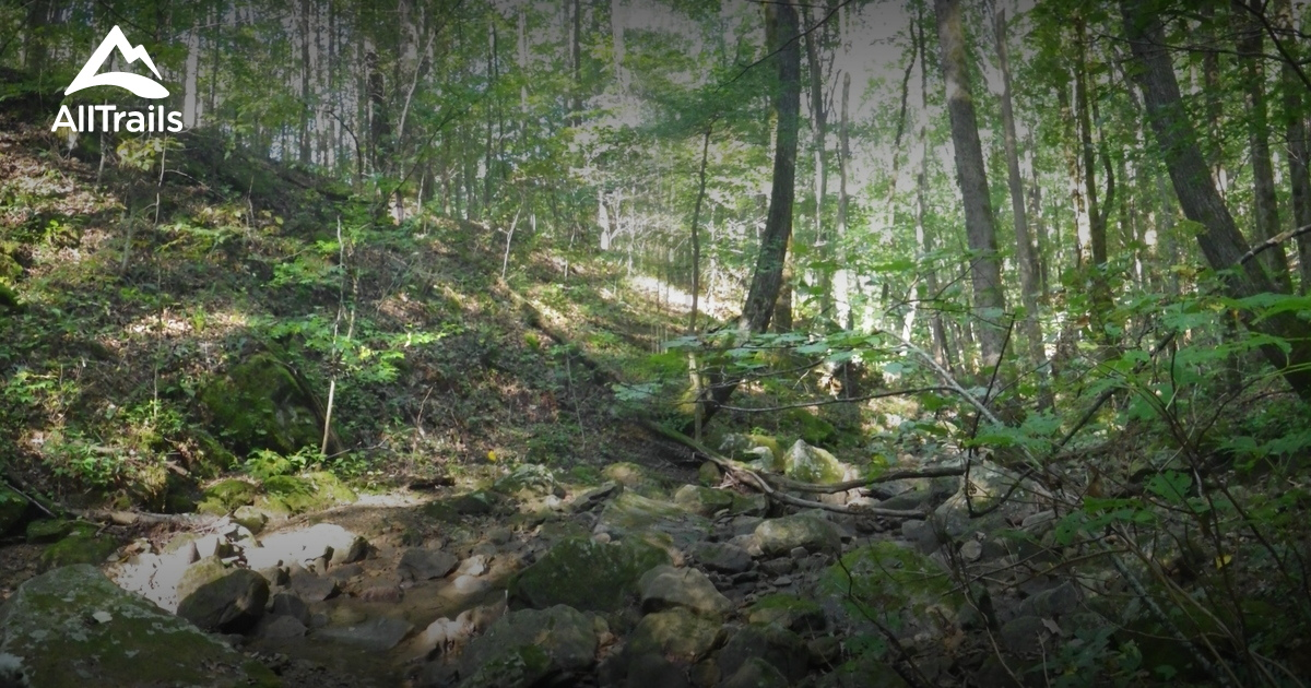 Camping In Tennessee State Parks With Dogs