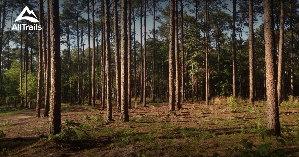 Best Trails In Harbison State Forest