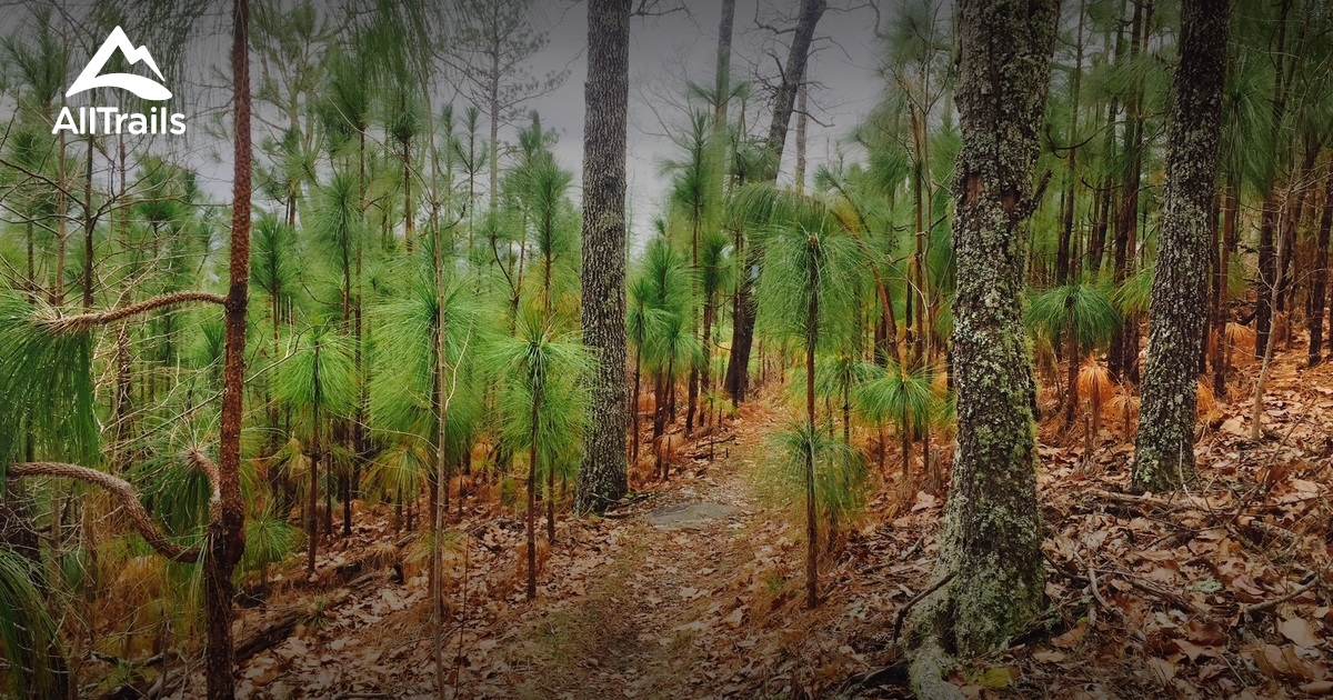 Best Trails In Talladega National Forest Alabama 194