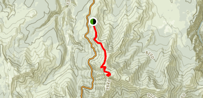 Chittenden Road to Mount Washburn Map