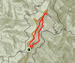 Camp Alice to Mount Mitchell Summit Trail Map