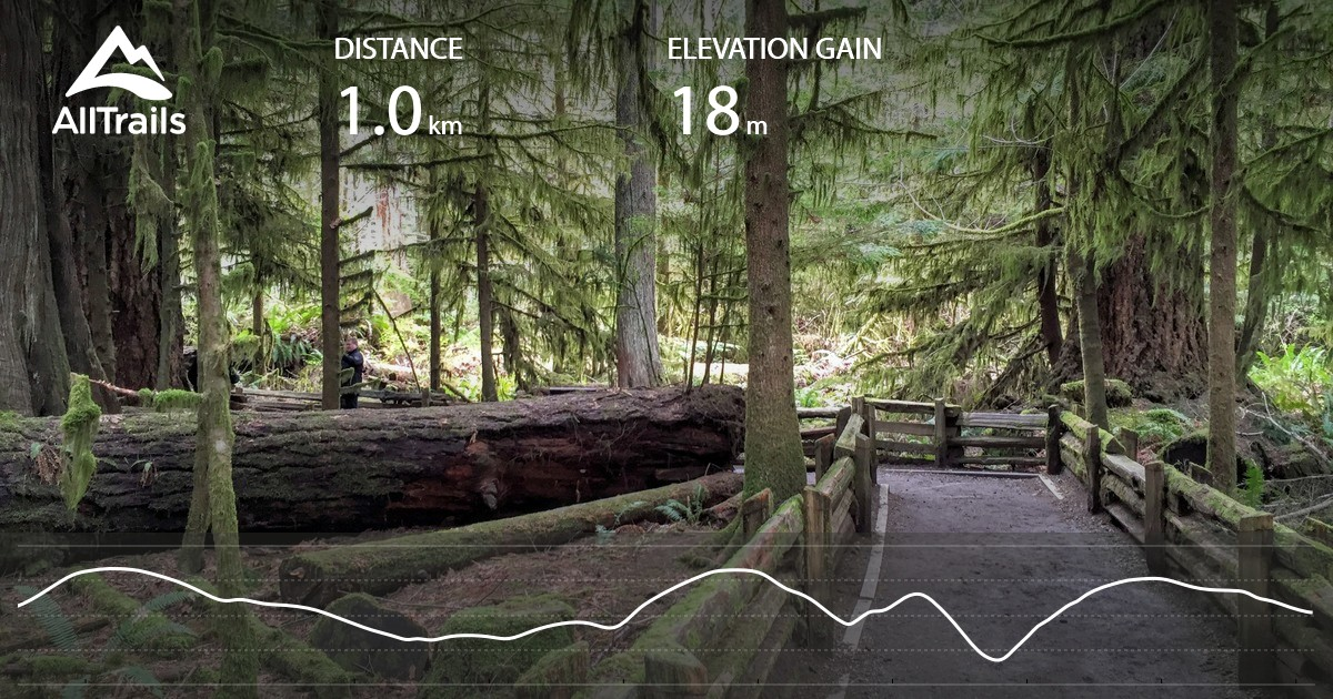 Old Growth and Living Forest Trail Loop