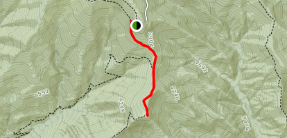 Andrews Bald Trail Map