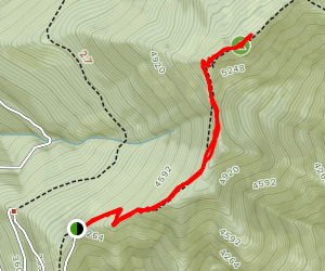Evergreen Lookout Trail Map