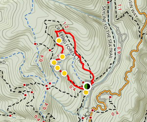Creeping Forest Trail Map
