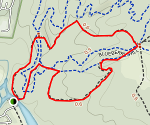 Forest Exploration Trail Map
