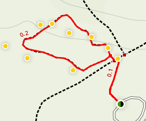 Pretzel Tree Trail Map