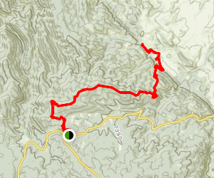 Ringtail Trail Map