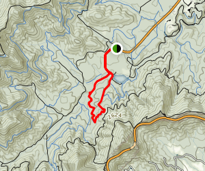 Pine Tree Loop Map