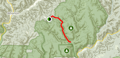 Nelson Hollow Trail Map
