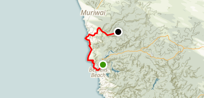 Te Henga (Goldie Bush) Walkway Map