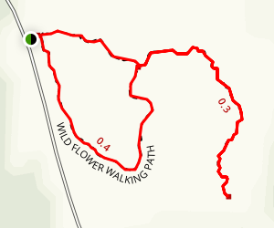 Wildflower Walking Path Map