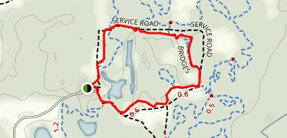 Sand Pine and Bridges Loop Map
