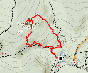 King Billy Pine Lookout Track Map