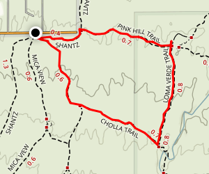 Cactus Forest, Cholla, and Pink Hill Trail Map