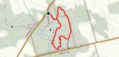 Sudden Regional Forest Loop Map