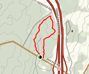 Crooked Tree Trail Map