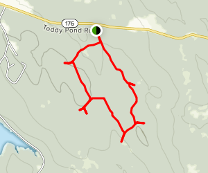 Surry Forest Loop Map
