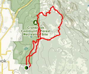 Forest Grove, Curly, Going Up, Hobogolin, Big Tree, Arbor Trails Map
