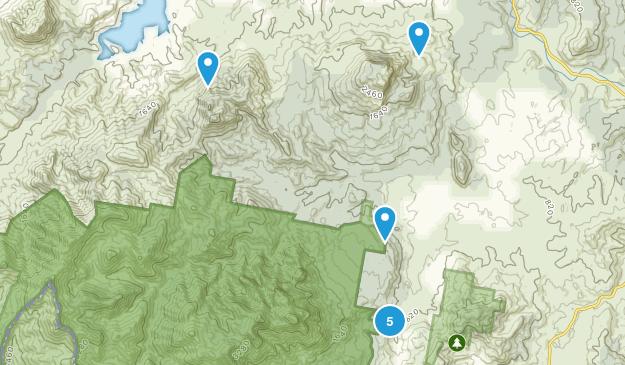 Palen Creek, Queensland Forest Map