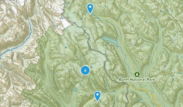 Field, British Columbia Dogs On Leash Map