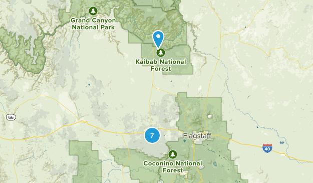 Williams, Arizona Birding Map