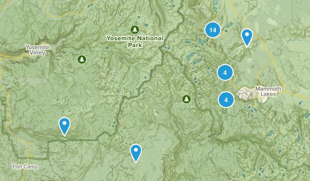June Lake, California Forest Map