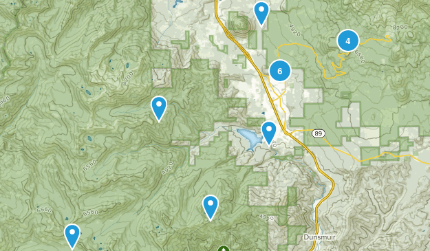 Mount Shasta, California Forest Map