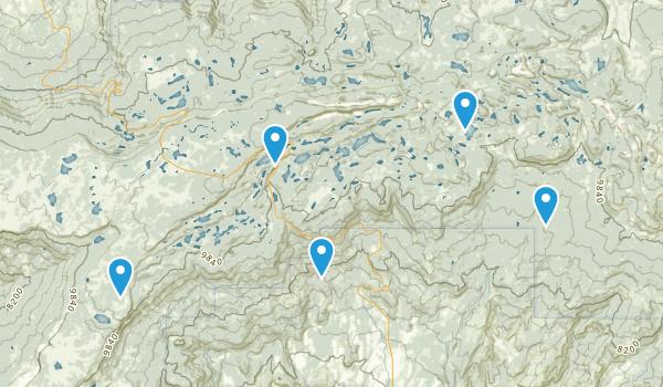 Cedaredge, Colorado Dogs On Leash Map