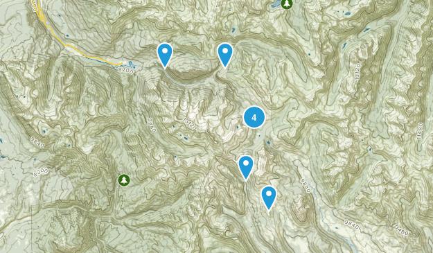 Elkton, Colorado Forest Map