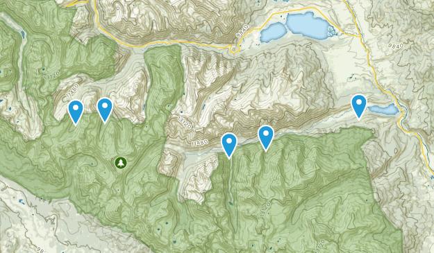 Granite, Colorado Wildlife Map