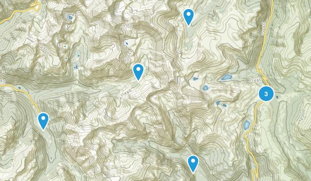 Montezuma, Colorado Forest Map