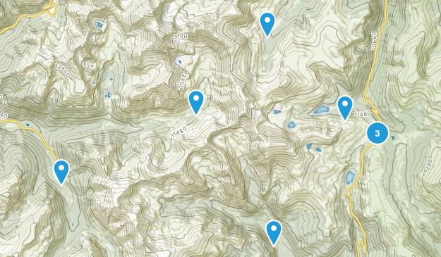 Montezuma, Colorado Wild Flowers Map