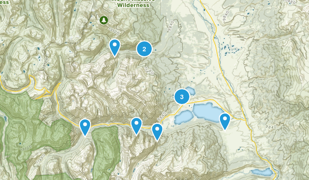 Twin Lakes, Colorado Forest Map