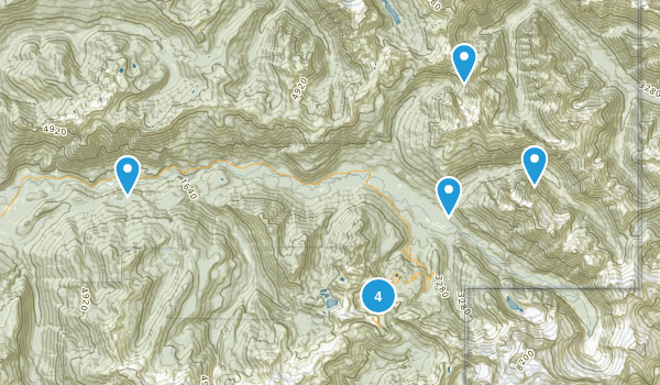 Maple Falls, Washington Dogs On Leash Map