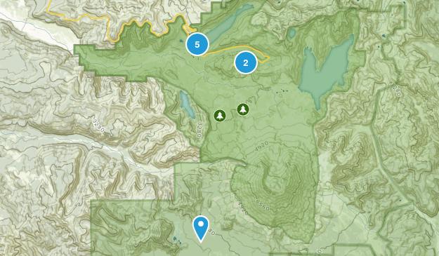 Toutle, Washington Wild Flowers Map