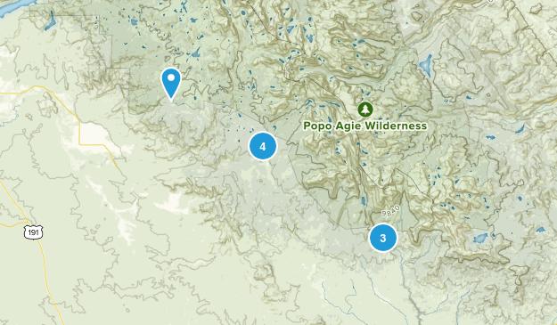 Boulder, Wyoming Wild Flowers Map