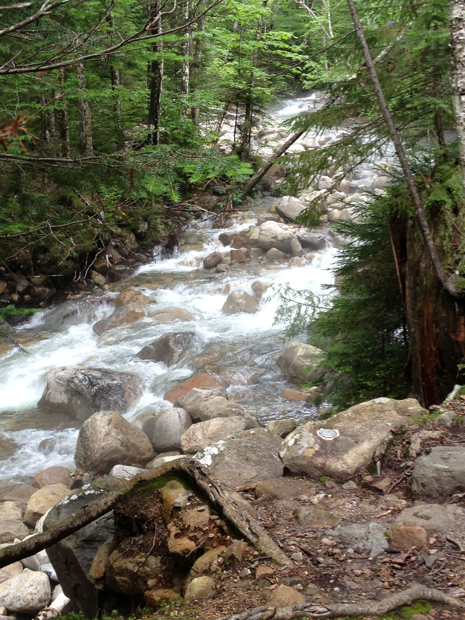 Franconia Brook Trail New Hampshire Alltrails Com