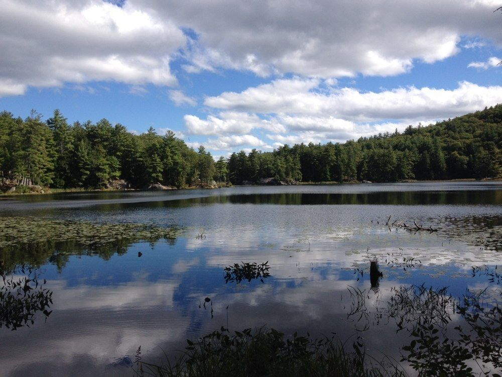 Best trails in pawtuckaway state park new hampshire alltrails publicscrutiny Gallery